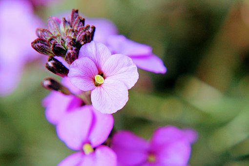 Flower, Lilac, Macro, Nature, Plant