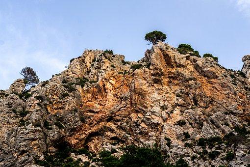 Majorca, Roche, Nature, Landscape, Tree, Spain