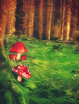 Fantasy, Forest, Mushrooms, Trees, Grass, Meadow