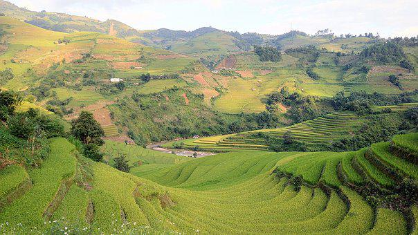 Rice Field, Terraces, Mountain, Travel, Natural