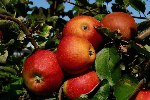 Apple, Fruit, Red, Ripe, Harvest, Food, Nature, Autumn