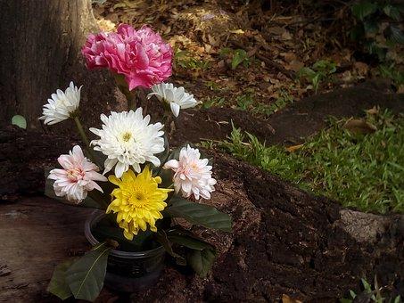 Bouquet, Flowers, Pink, Open, Flower, Blooms, Nature