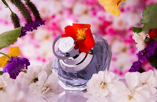 Fragrance, Perfume, Flowers, Tender, Wellness, Care