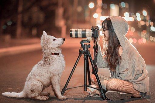 Puppy, Dog, Pet, Night, Schäfer Dog, Baby, Photogenic