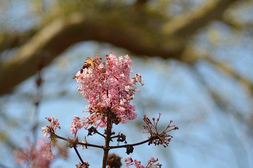 Flower, Pink, Garden