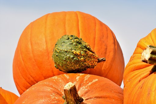 Pumpkin, Fruit, Autumn, Cucurbita Maxima, Choose, Large