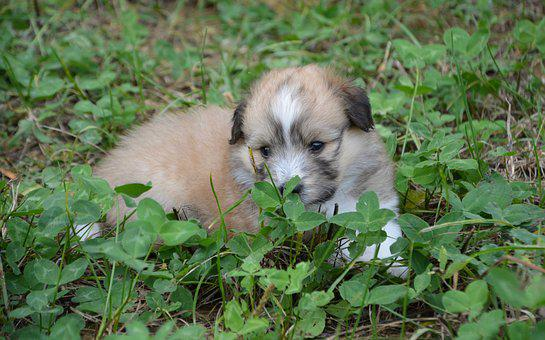 Puppy, Puppy Lying In Grass, Pup, Dog Cross