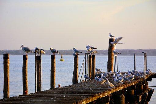 Seagulls, Rest, Jetty, Water, Lake, Garda, Sirmione