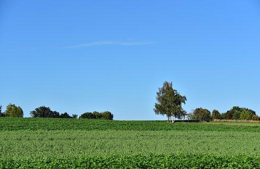 Horizon, Trees, Meadow, Sky, Summer, Background, Blue