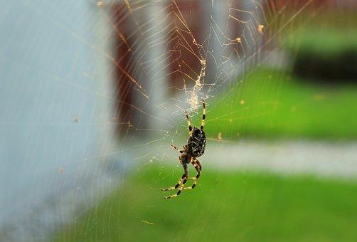 Spider, Araneus, Hotel, Cobweb, Insect, Phobia, Nature