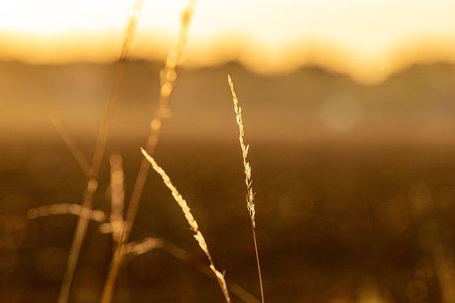 Nature, Grass, Landscape, Sunset, Rest, Field, Still