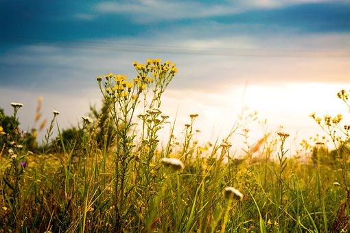 Sky, Sun, Field, Summer, Clouds, Landscape