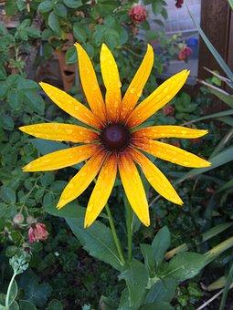 Flower, Nature, Yellow, Summer