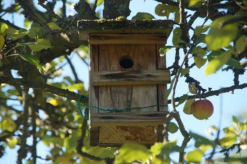Bird Feeder, Apple Tree, Breed, Tree, Wood, Rural