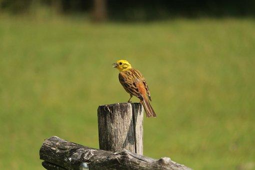 Bird, Nature, Almtal, Austria, Plumage, Colorful, Wing