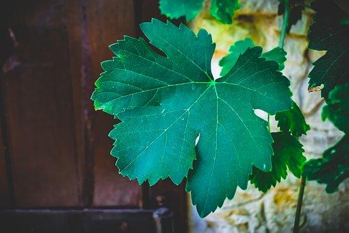 Arbor, Vine, Leaf, Summer, Nature