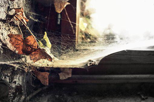 Autumn, Cobweb, Leaves, Close Up, Insect, Masonry