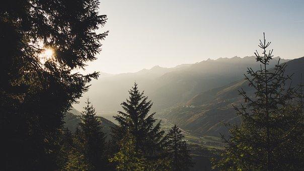 Valais, Forest, Autumn, Walk, Switzerland, Sun
