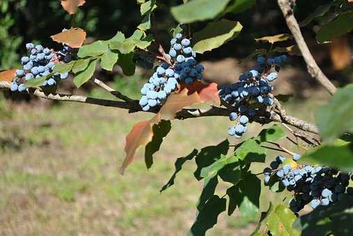 Garden, Plant, Autumn, Crop