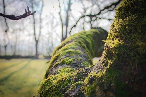 Tree, Moss, Branch, Green, Autumn