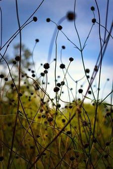 Wild Flower, Meadow, Plant, Flora, Grass, Background