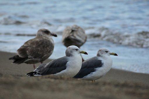 Animal, Sea, Beach, Wave, Bird, Wild Birds, Seabird