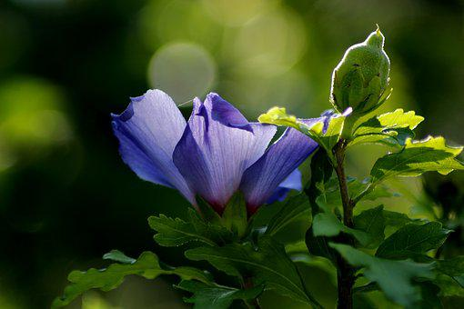 Blossom, Bloom, Sun, Flower, Bush, Garden, Close Up