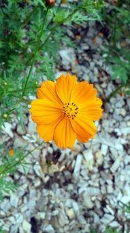 Summer, Yellow, Flower, Nature, Sunflower, Bloom, Plant