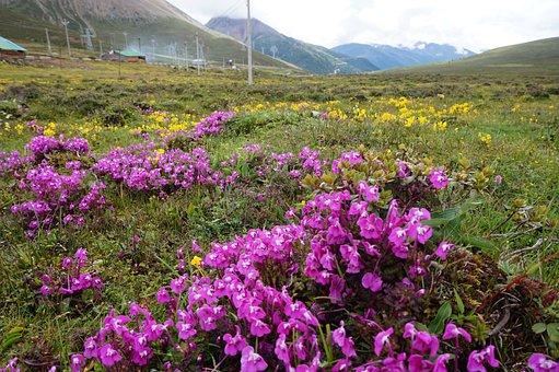 Yunnan, China, Flowers