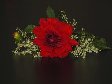 Dahlia Flower, Red, Bud, Flora, Dahlia, Late Summer