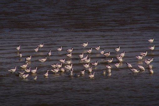 Watts, North Sea, East Frisia, Birds, Nature, Animals
