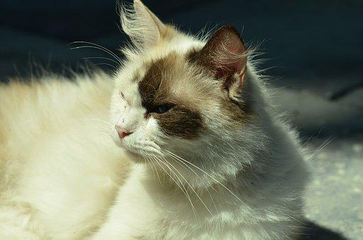 Cat, Cats, Arrogant, Animal, Pet, Feline, Kitten