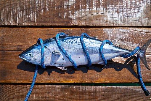 Fish, Fresh, Food, Catch, Hunter, Fishing Rod, Marine