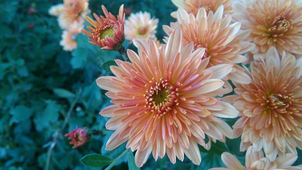 Flower, Close Up, Macro
