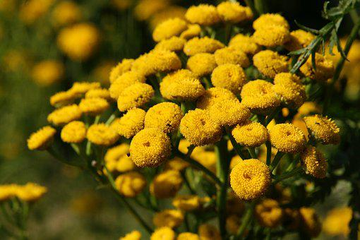 Flowers, Yellow, Pointed Flower, Bloom, Flower