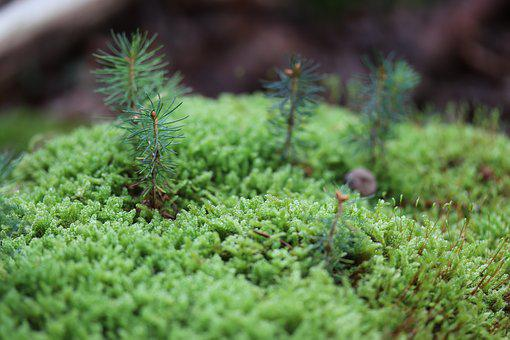 Moss, Forest, Nature, Green, Forest Floor, Vegetation