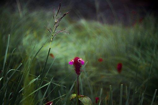 Flower, Grass, Cloudy, Nature, Garden