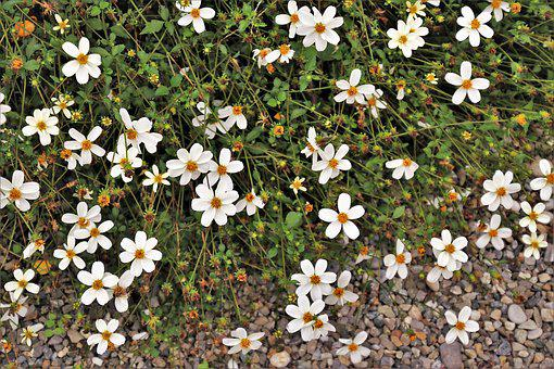Flowers, Minor, The Delicacy, White, Garden, Plant