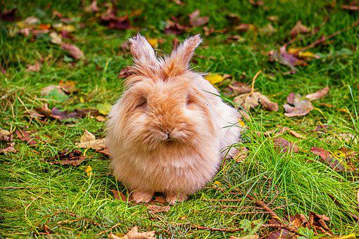 Rabbit, Green, Cute, Nature, Grass, Animal, Easter