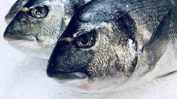 Fish, Food, Nutrition, Kitchen, Eat, Sea, Healthy