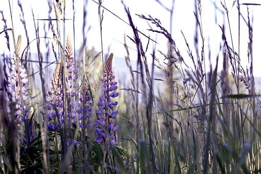 Lavender, Flower, Weed, Hike, Hiking, Trail, Outside