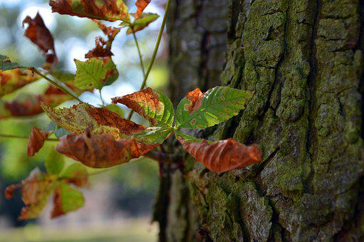 Tree, Log, Bark, Leaf, Withered, Autumn, Fall Color