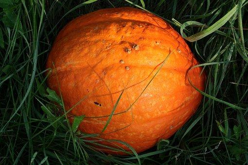 Pumpkin, Grass, Morning Light, Autumn, Nature, Orange