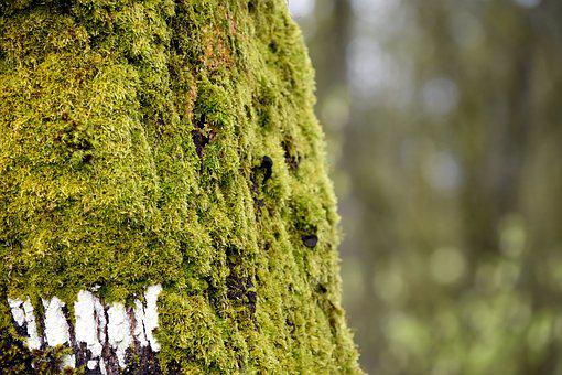 Moss, Tree, Forest, Outside, Outdoors, Green, Hike