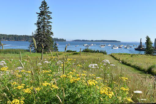 Owls Head, Maine, Wildflowers, Lobster Boats, Nature