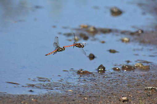 Natural, Landscape, Pond, Waterside, Insect, Dragonfly