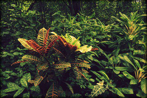 Jungle, Plant, Green, Rainforest, Exotic, South America