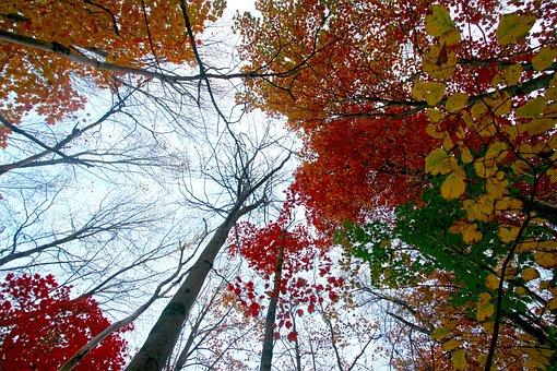 Fall Foliage, Water, Reflections, Sunset, Colors