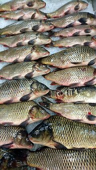 Fresh Fish, Carp, Nature, Animals, Shop, Ice, Fish