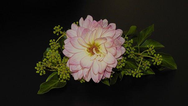 Dahlia, Blossom, Bloom, Ivy, Still Life, Flora, Pink